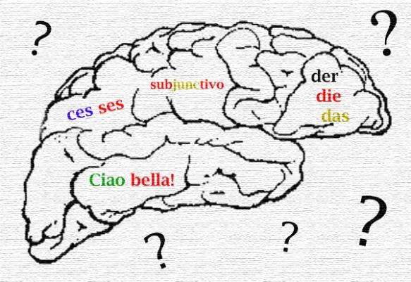 www.languagesalive.com